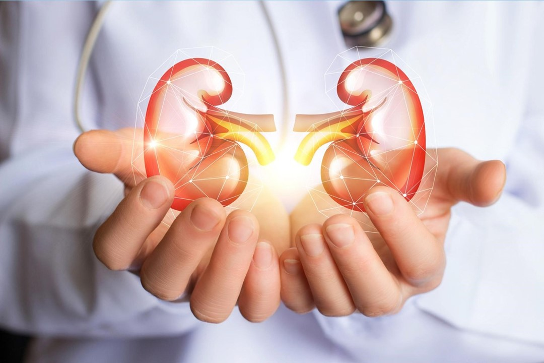 8 Tips to Keep Your Kidney Healthy Forever